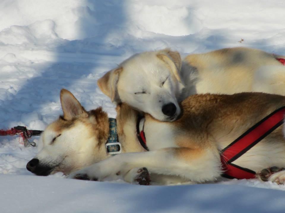 An Arctic Adventure By Husky Sled