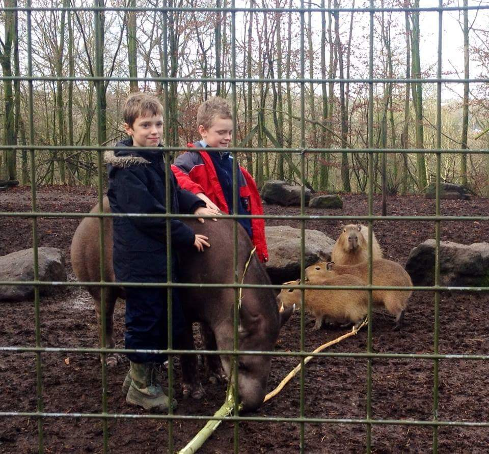 Little Zoo Keepers experience at Dudley Zoo