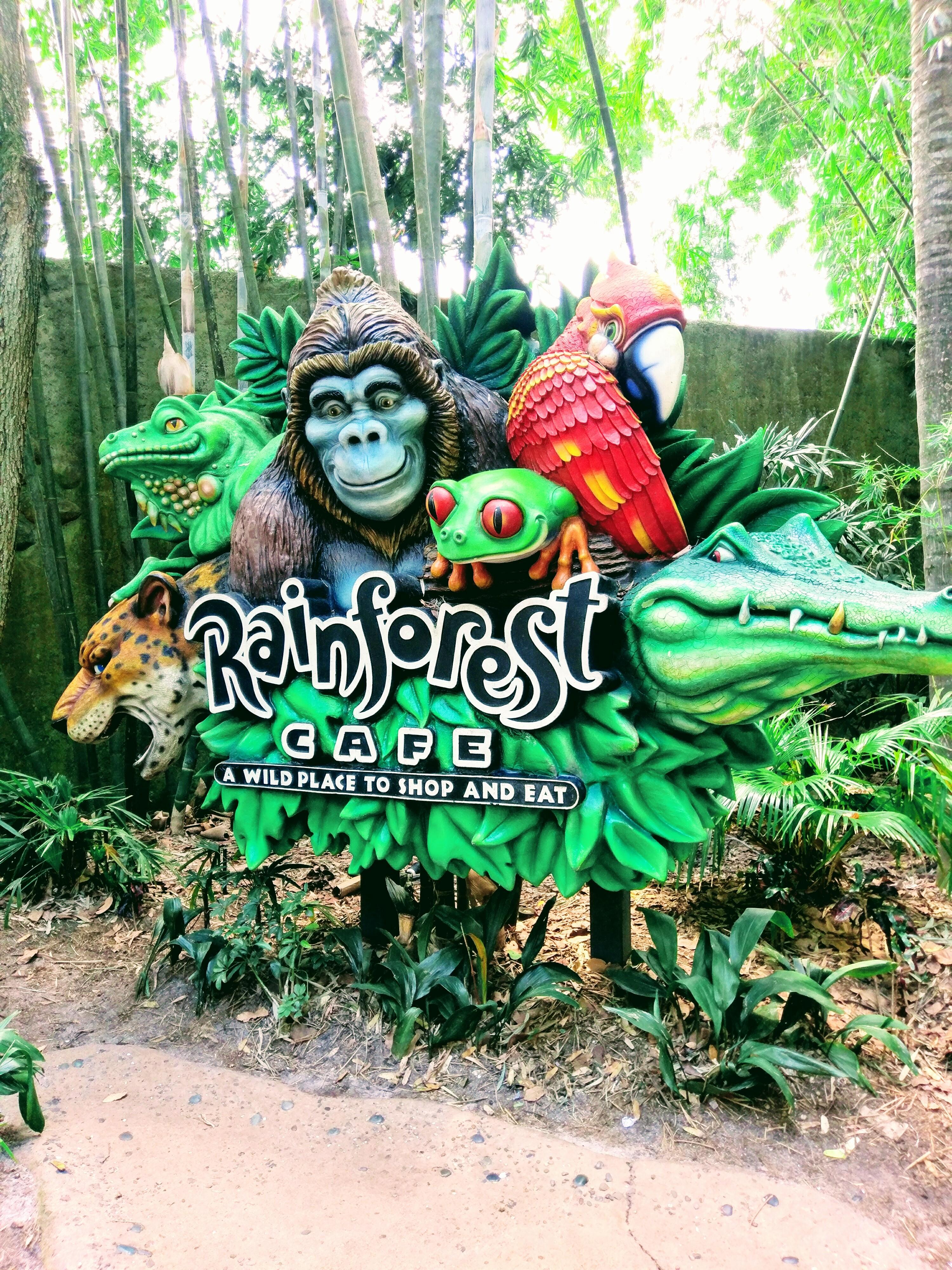 The Rainforest Cafe at Disney's Animal Kingdom.